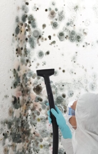 Toxic Mold Cleaning